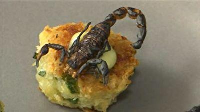 تزئین غذا با حشرات! + فیلم