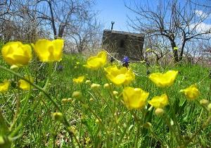 طبیعت زیبا و بهاری مزرعه «روزجان» + تصاویر