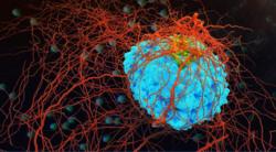 امید تازه دانشمندان برای نابودی سلولهای سرطانی/ گیاه ضدسرطان را بشناسید