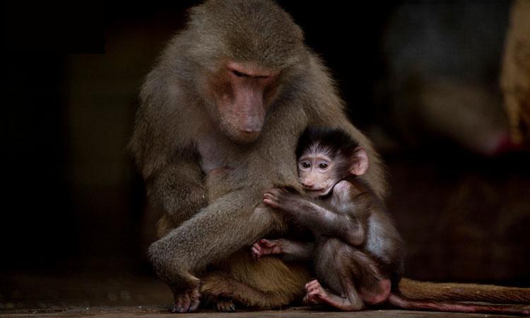 افسردگی حیوانات؛ دستاورد باغ وحشهای غیراستاندارد/آیا نگهداری حیوانات در باغ وحشها قانونی است؟