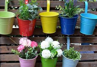 کدام گیاهان مناسب بالکن هستند؟