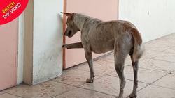 صحنهای باورنکردنی که سگ وفادار در یک دانشگاه رقم زد! +فیلم