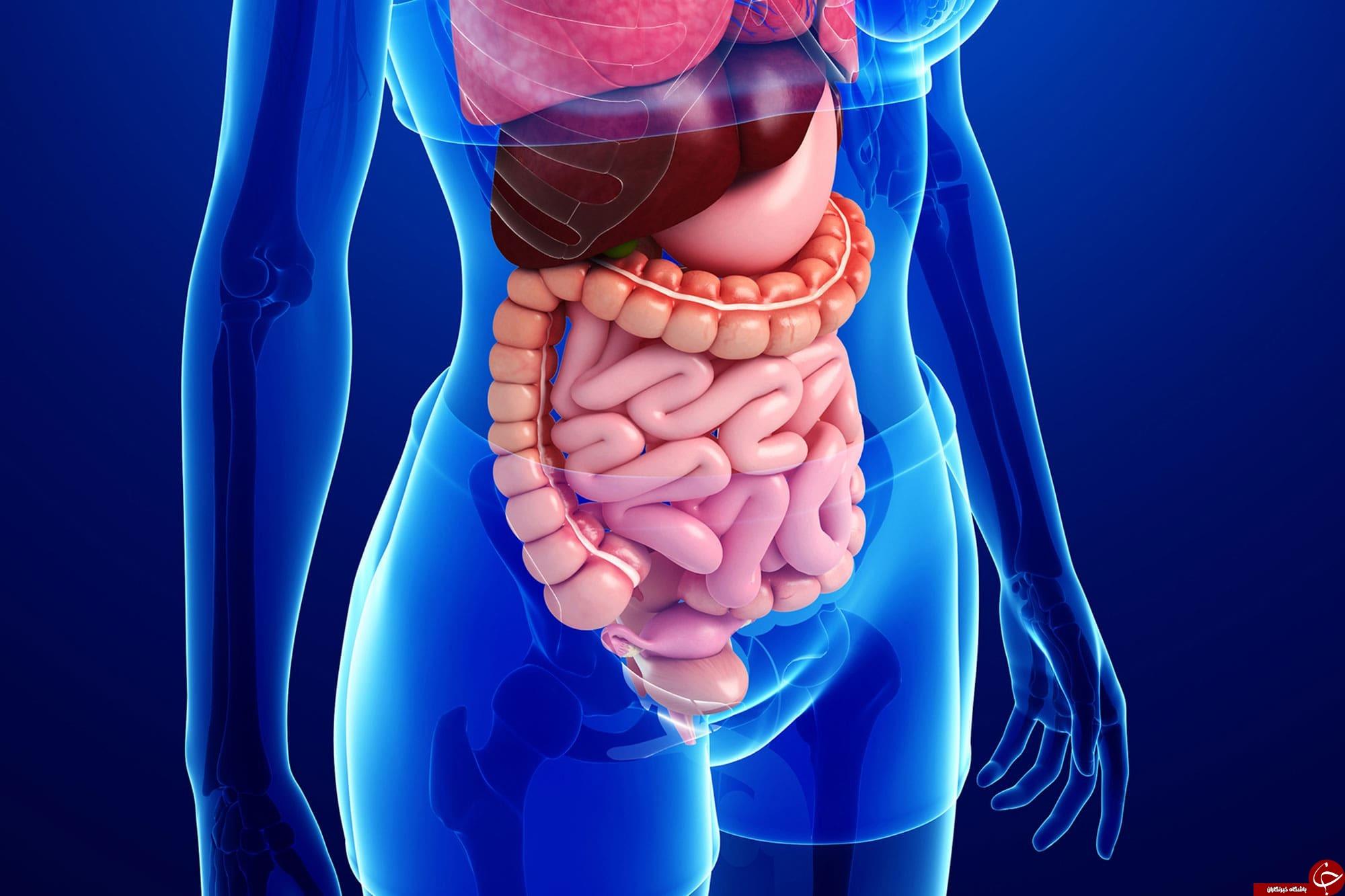 آیا سلامتی انسان از روده وی آغاز میشود؟! + بررسی تاثیر سلامت دستگاه گوارش بر روی بدن