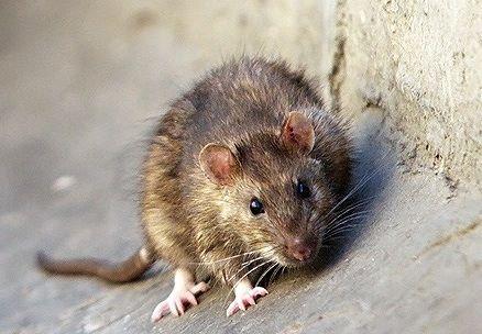 وقتی موشها مسافران مترو میشوند! + فیلم