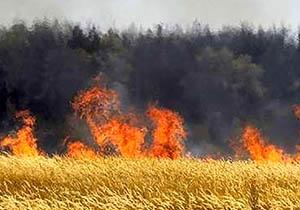 آتش سوزی در مزرعه جو در گلستان
