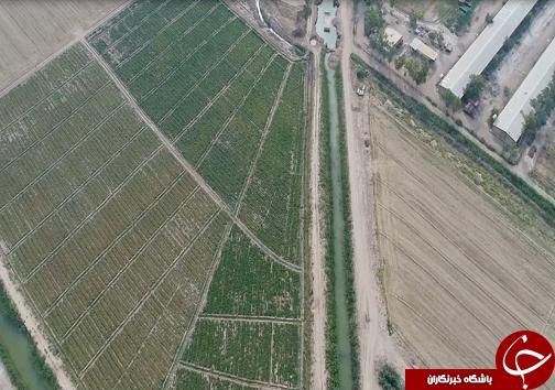 شهر در تسخیر مراکز تجاری/جاده چالوس یکطرفه می شود/قطب کشاورزی کشور رو به سوی استقلال