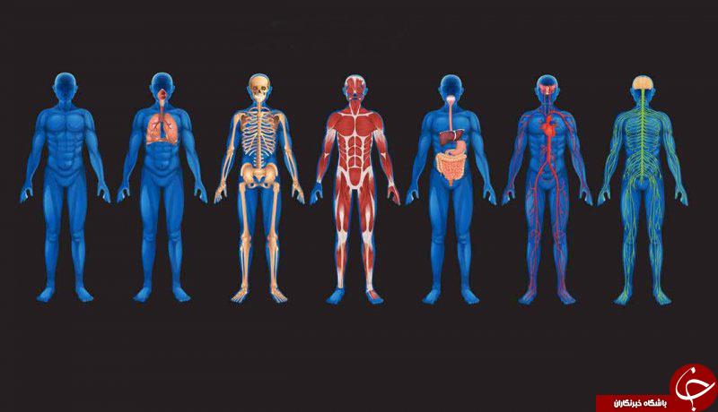 احشاء بدن توسط چه پوششی نگه داری میشود؟