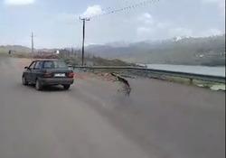وضعیت اسفناک جاده در پایین طالقان + فیلم