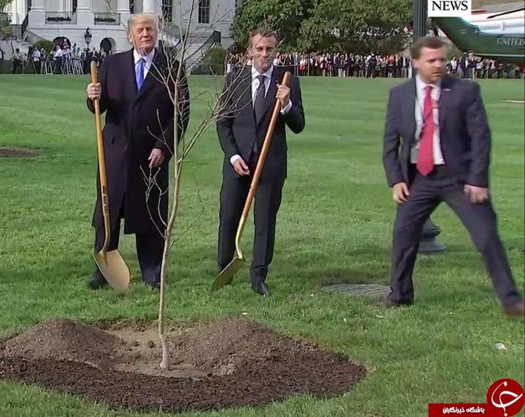 درخت دوستی ترامپ و مکرون خشکید!