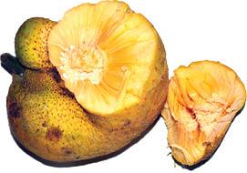 ۳ میوه آسیایی که نمیشناسید