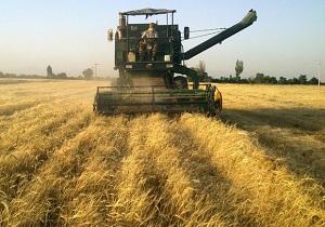 تولید ۳ میلیون و ۲۳۵ هزار تن محصولات زراعی در استان همدان