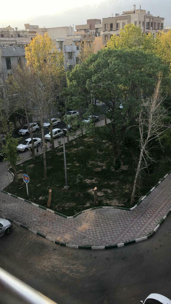 پشت پرده قطع درختان میدان 8 نارمک