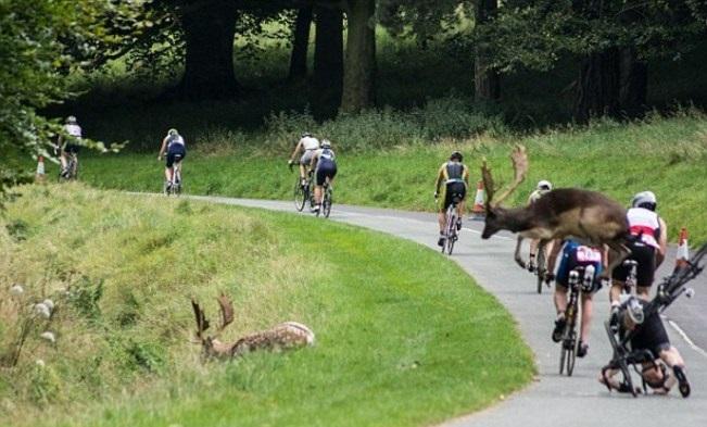 تصادف دوچرخه سوار المپیکی با گوزن