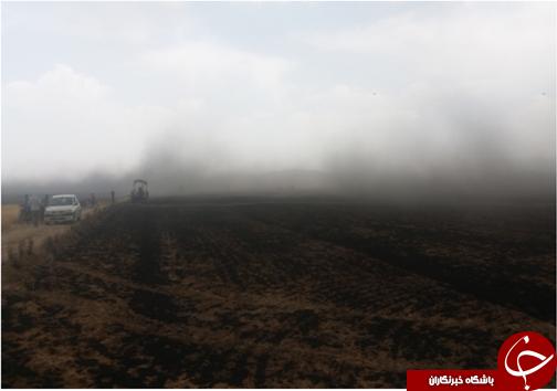 آتش سوزی بیش از ۳۰ هکتار از مزارع شیراز