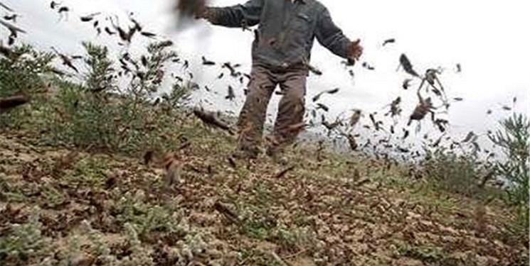 راز هجوم ناگهان حشرات به کشور چیست؟