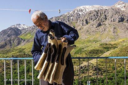 فرنجی کردستان