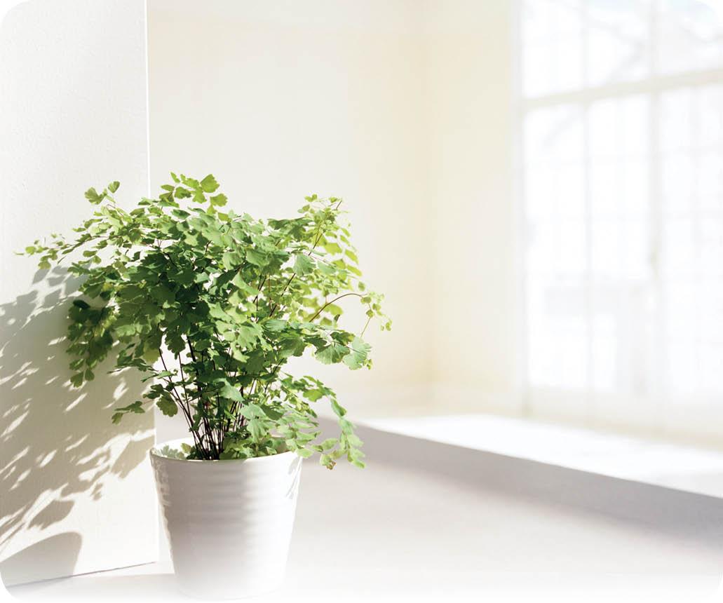 نکاتی طلایی برای نگهداری گلها که باید بدانید