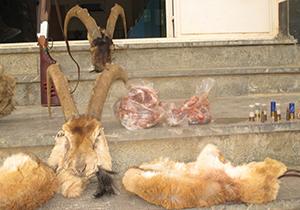 دستگیری شکارچی غیر مجاز در کیار