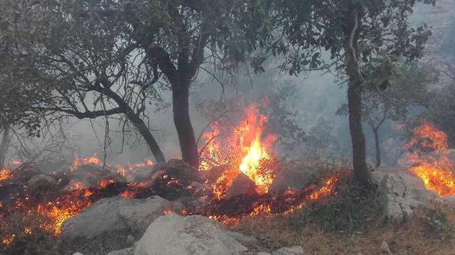 آتش سوزی مراتع جنگلی روستای «گله جار» ایلام نیازمند کمک مردم است