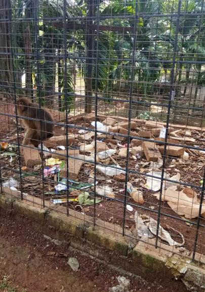 وضعیت اسفبار حیوانات در منزجرکنندهترین باغ وحش جهان! + تصاویر