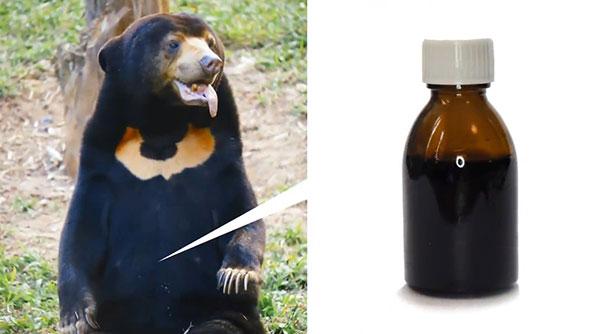 گرانترین مواد به دست آمده از حیوانات که باورتان نمیشود / از قیمت خون خرچنگ ۲۰۰ میلیون اومانی تا قیمت نجومی صفرای خرس + تصاویر