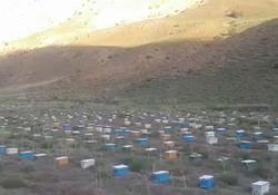 پرورش ملکه زنبور عسل در روستای طزره + فیلم