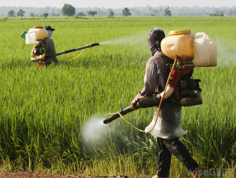 مبارزه باسن مادر در بیش از 4 هزار از مزارع نهاوند