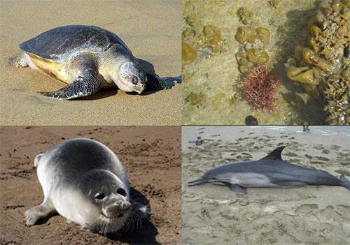 اولویت اصلی حفاظت از زیستگاه ها است /افزایش گونه های دریایی مناطق تحت حفاظت سازمان محیط زیست