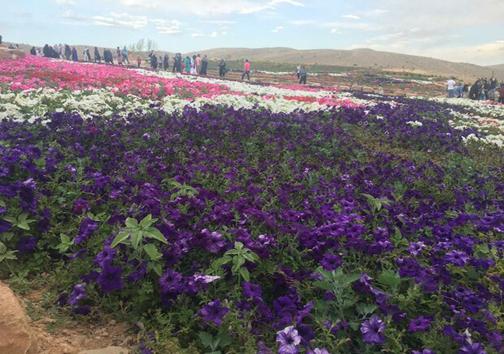 باغ گل های شیراز، باغی پر از گل یا پر از نقص/هدف از افتتاح چه بود؟