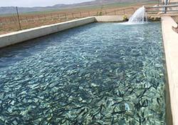افزایش استخرهای پرورش ماهی در باخرز