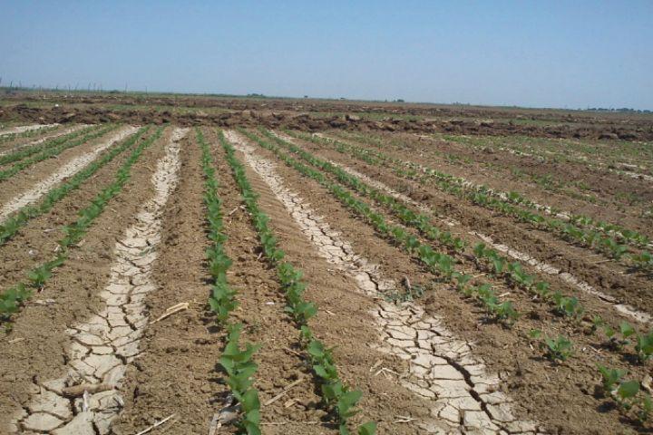 بیتوجهی وزارت نیرو و جهاد کشاورزی به موضوع الگوی کشت