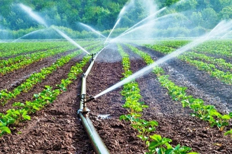 بیش از ۹۴۱ میلیون متر مکعب آب سمنان  در بخش کشاوری مصرف می شود