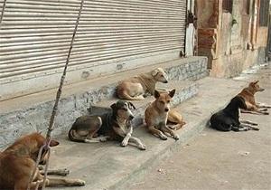 راه اندازی سایت اطلاعات سگهای بدون صاحب تا ۱۰ روز آینده/ درمان، عقیم سازی و پلاک کوبی از جمله وظایف نقاهتگاه سگهای بدون صاحب
