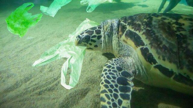کاهش زبالههای پلاستیکی اقیانوسها در اولویت نشست گروه ۲۰