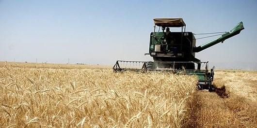 ۳ مرکز خرید گندم در شهرستان آرادان در نظر گرفته شده است