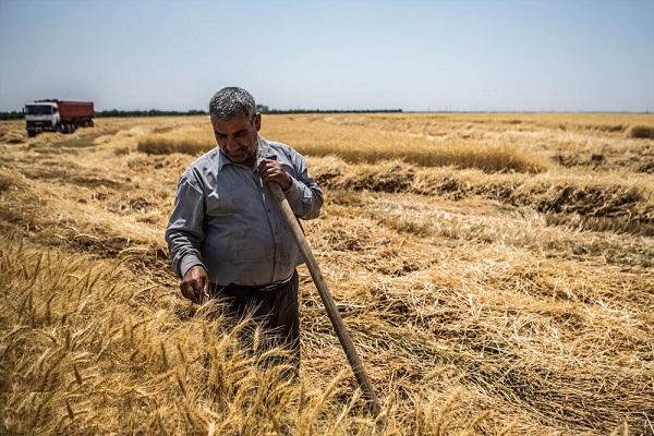 ترغیب کشاورزان برای تحویل به موقع گندم/طرح انتظامی جلوگیری از خروج گندم از استان سمنان به طور جد پیگیری شود