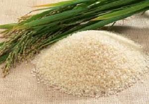 اعلام مدت زمان رسوب کالاهای وارداتی و صادراتی/ افزایش ۱۵ درصدی تولید برنج