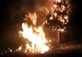 باشگاه خبرنگاران -فیلمی از آتشسوزی فضای سبز در یزد