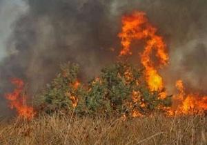 سهلانگاری گردشگران ۵۰ هکتار از مراتع و جنگلها را نابود کرد/ مهار آتشسوزی در منطقه حفاظت شده دیزمار+ عکس