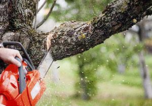 توضیح رییس منابع طبیعی گرگان در مورد قطع درختان