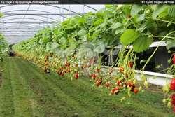 ضرورت ایجاد ۲۱۰ هکتار گلخانه در همدان