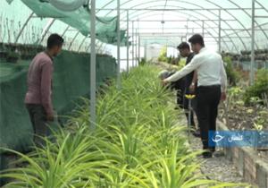 کارآفرینی و راه اندازی شغلی پایدار با یک گیاه دور ریختنی! + فیلم