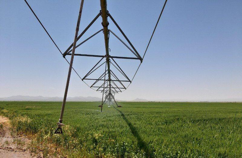 سامانه های نوین آبیاری در ۱۲۲۰ هکتار زمین کشاورزی خدابنده به بهره برداری رسید