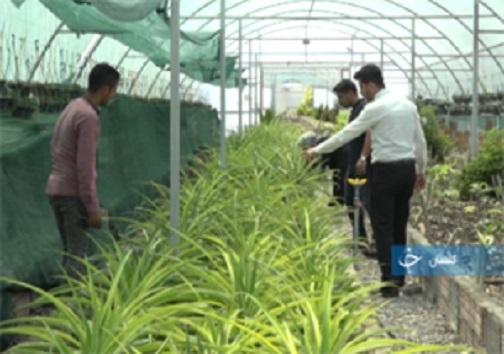 زندگی دوباره یک تالاب با بارش باران تا راه اندازی شغلی پایدار با یک گیاه دور ریختنی! + فیلم