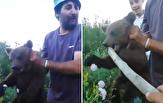 باشگاه خبرنگاران -اذیت و آزار توله خرس توسط مردان محلی در رومانی +فیلم