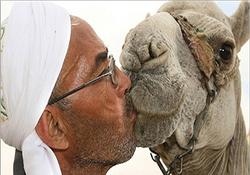 شتر سواری سعودیها با اعمال شاقه! + فیلم