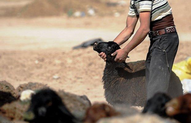 انهدام باند سارقان احشام شرق استان در شهرستان ریگان