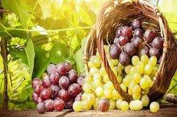 نخستین شرکت کشاورزی تخصصی انگور درخراسان رضوی راه اندازی شد