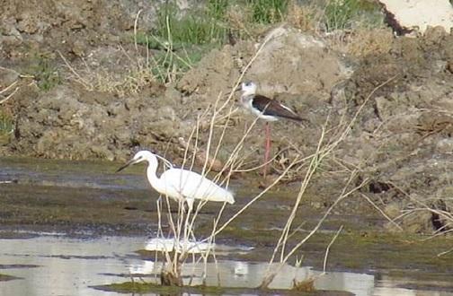 بارش ها، پای پرندگان مهاجر را به گاوخونی کشاند/۹۰ درصد تالاب همچنان خشک است