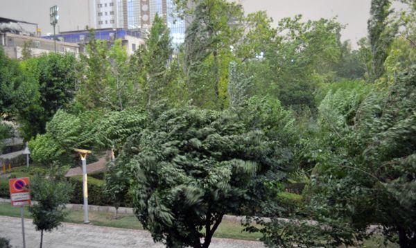 طوفان در تهران مصدوم نداشت
